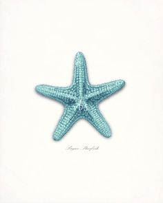 Coastal Decor Sea Shell  Sugar Sea Star by vintagebytheshore
