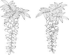 白黒の花のイラスト-白黒・藤