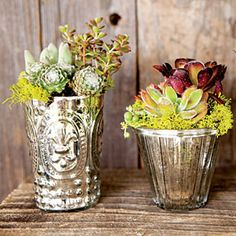 Succulents in Recycled Vases - Stylish Succulent Garden Projects - Sunset Mobile