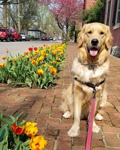 Colby enjoying the spring weather