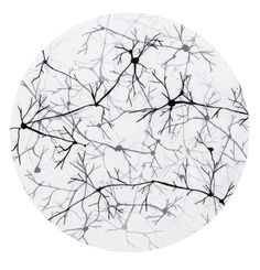 """neuronal bodies, dendrites, synapses  Jesus said, """"I am the vine, you are the branches."""""""