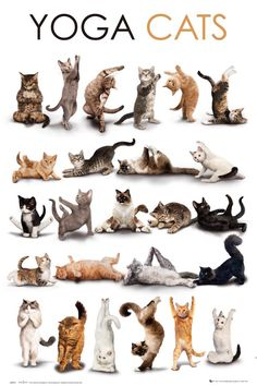 Get this Cat Art Poster and other select festively feline artwork, cat-themed home décor and gifts featuring cats and kittens to show that a Happy Home is a Cat Home! Animals And Pets, Funny Animals, Cute Animals, Crazy Cat Lady, Crazy Cats, Yoga Gato, Cute Cats, Funny Cats, Fun Funny