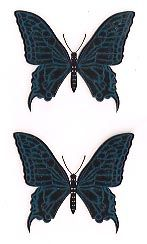 Blue Butterfly Paper Tattoos