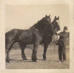 DRAFT HORSES IN HAND 1910s-20s