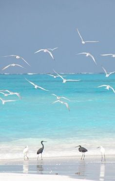 Gorgeous Birds on the Beach http://www.exquisitecoasts.com/