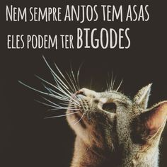 Lindos bigodes ♡ Love Pet, I Love Cats, Kittens Cutest, Cats And Kittens, Animals And Pets, Cute Animals, Albert Schweitzer, Gatos Cats, Cat Facts