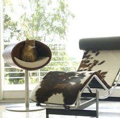 Gato - Ideias de Camas para os bichanos ~ Arte De Fazer   Decoração e Artesanato