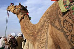 Amazing Camel Hair Art at Bikaner, India for a Camel Festival.  Photographer Osakabe Yasuo says that camel hair artwork can take up to three years to create. For the first two years, the hair is grown, trimmed and prepped. For competitions, the hair is then trimmed into intricate patterns and dyed for the dramatic effect.  Photo by Osaprio