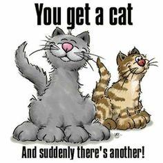 You get a cat....