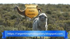 The patagonian steppe is a mystical journey into the past, full of stories, memories and mystery. Mystic, Photo Galleries, The Past, Journey, Memories, Landscape, Gallery, Animals, Image