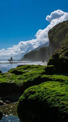 Green velvet rocks Motukeikei beach - NZ