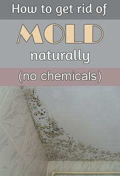 How to get rid of mold naturally, without chemicals