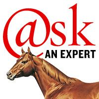 How do you train a spooky horse? Our friends at the Certified Horsemanship Association have horse-training solutions to this problem. #horsetraining #horsehelp http://americashorsedaily.com/training-a-spooky-horse/