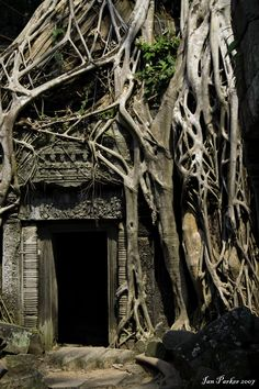 Photo by Jan Parker - Doorway and Roots, Ta Prohm Temple, Angkor, Cambodia - at http://parkerlab.bio.uci.edu/nonscientific_adventures/Doorways.htm