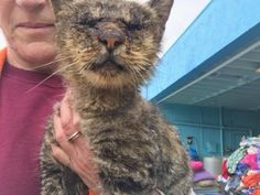 """2/11/17 On Saturday afternoon, animal activist and talented photographer John Hwang, captured a heartbreaking moment in time of a cat in desperate need at the Baldwin Park Animal Care Center in California. So moved by the helpless cat's plight, John asked for help on his Facebook page: """"… She barely lacked the strength to meow. Parts …"""