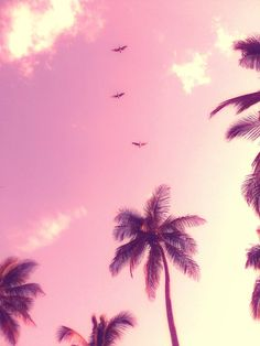 Palmtrees, it's so Miami