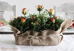 Herb Centerpieces For Wedding | ... Rose Wedding Centerpieces | Budget Brides Guide : A Wedding Blog