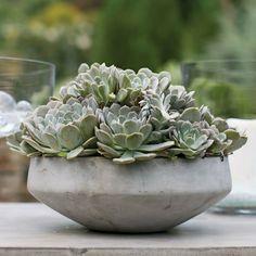 Concrete Planter Bowl - Axton – Winnoby