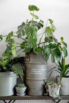 A home in the netherlands indoor plants мини сады, растения, Botanical Interior, Interior Plants, Industrial Interiors, Industrial Living, Industrial Style, Plants Are Friends, Monstera Deliciosa, Decoration Plante, Green Life