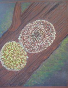 Waldorf ~ 5th grade ~ Botany ~ Lichen ~ chalkboard drawing