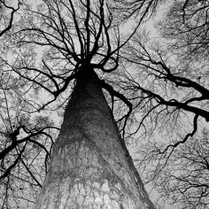 Trees Photographed by Grant Simon Rogers trees sky nature black and white Cool Pictures, Cool Photos, Tree Photography, Landscape Wallpaper, Ansel Adams, Black And White Pictures, Tree Art, Black And White Photography, Photo Art