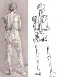 Andrew Ameral - I make sure that the skeleton I draw, properly aligns with the figure I drew from life and matches key visual points found on the living.