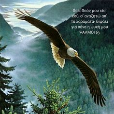 Types of Eagles - American Bald Eagle art portraits, photographs, information and just plain fun Types Of Eagles, The Eagles, Bald Eagles, Pretty Birds, Beautiful Birds, Animals Beautiful, Eagle Images, Eagle Pictures, Photo Aigle