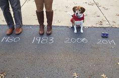 perros anunciando19