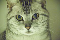 Bondo. Katzen-Content #cat