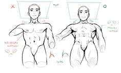 Credit to Miyuliart Human Anatomy Drawing, Drawing Body Poses, Body Reference Drawing, Anatomy Art, Art Reference Poses, Drawing Tips, Anatomy Sketches, Art Drawings Sketches, Drawing Expressions