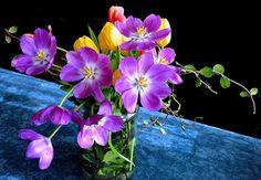 prettylittleflower:  Tulipani viola by Melisenda2010 on Flickr.