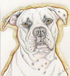 White American Bulldog Pet Dog Art Portrait Pencil Print from Drawing Carla Smale