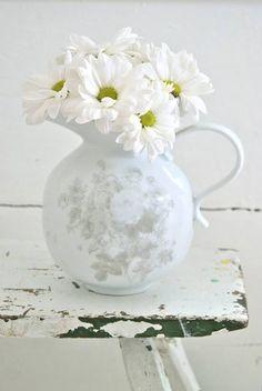 White chrysanthemums ~ ♥
