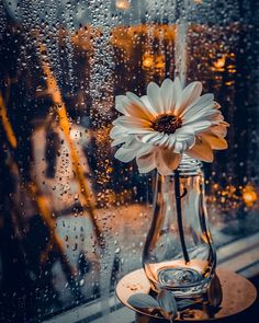 Raindrops and Roses: Photo Wallpaper Nature Flowers, Beautiful Flowers Wallpapers, Beautiful Nature Wallpaper, Scenery Wallpaper, Pretty Wallpapers, Wallpaper Backgrounds, Rain Images Beautiful, Galaxy Wallpaper, Creative Photography