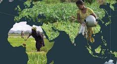 La escasez y degradación del agua en el mundo: una creciente amenaza para la seguridad alimentaria