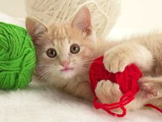 playful_kitten-standard_wallpapers.jpg (1600×1200)