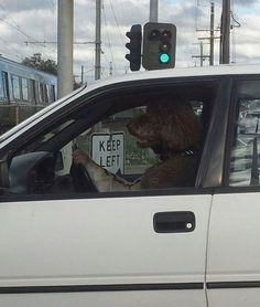 Dog Days They can speak, they can drive, they can do anything