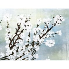 I want this for my bedroom...Cherry Blossoms II Canvas Print