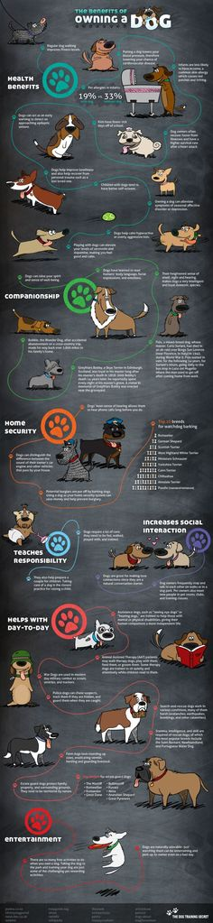Benefits of owning a #dog #infographic.