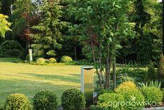 Ogród Dominiki - strona 171 - Forum ogrodnicze - Ogrodowisko