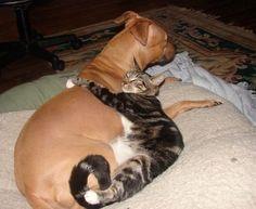 I love my pitbull!