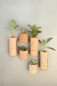 mini-plantas