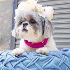 Don't be a sad puppy just 'cause you're missing #Coachella. Stay in the #FestivalSpirit with one of our #FlowerCrowns!