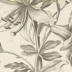 BOTANICAL LINES-Verzameld werk van David Oliveira - Alle Rijksstudio's - Rijksstudio - Rijksmuseum