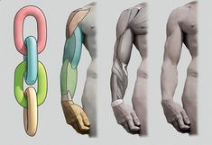 Exceptional Drawing The Human Figure Ideas. Staggering Drawing The Human Figure Ideas. Male Figure Drawing, Figure Drawing Reference, Anatomy Reference, Art Reference Poses, Arm Anatomy, Human Anatomy Drawing, Body Drawing, Arm Drawing, How To Draw Anatomy