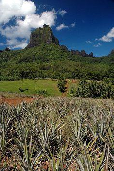 Moorea Landscape, French Polynesia ✯ ωнιмѕу ѕαη∂у