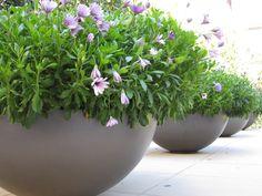 Pots, annual planting