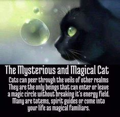 Image represents a spirit animal or familiar that belongs to a witch. Most familiars are said to be a part of a witch from the moment they are born but in other cases an animal can be summoned through a spell to do a witches bidding. Cat Spirit Animal, Animal Spirit Guides, Crazy Cat Lady, Crazy Cats, Wiccan Spell Book, Magic Circle, Cat Facts, Cat Love, Witchcraft
