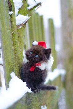 Christmas ?????