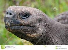 Resultado de imagen para tortuga cabeza Animals, Turtles, Animales, Animaux, Animal, Animais